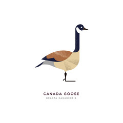 Canada goose duck bird isolated animal cartoon