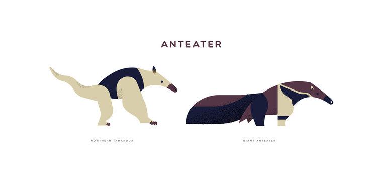 Wild anteater isolated animal cartoon set