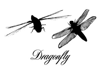 The silhouette of a dragonfly. Vector illustration
