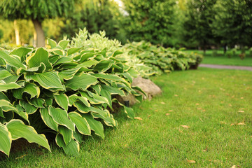 Foto op Plexiglas Pistache Picturesque landscape with beautiful green lawn on sunny day. Gardening idea