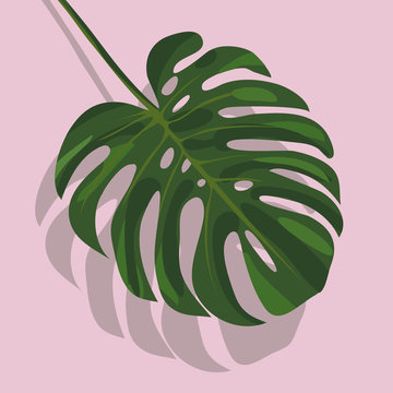 Tropical monstera leaf with shadow isolated on pink background. stock illustration