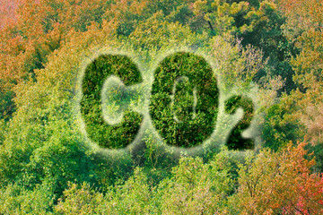 Planting more trees reduce the amount of CO2 - concept image with Co2 text against woodland
