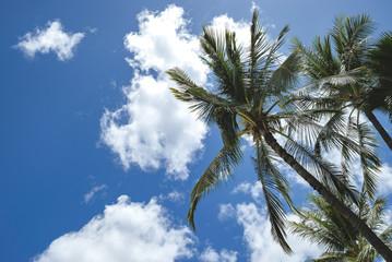 ホノルル ハワイ HAWAII Honolulu 旅行 南国 写真素材 アメリカ 旅