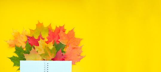 Printed kitchen splashbacks Beige Leaves of paper fall red, orange, yellow leaf fall.