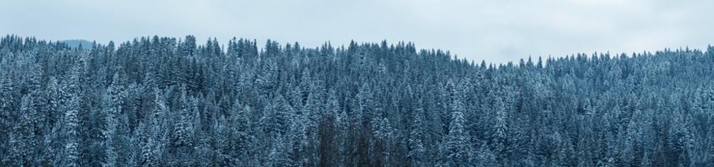 Panoramic view of winter forest. Ukraine