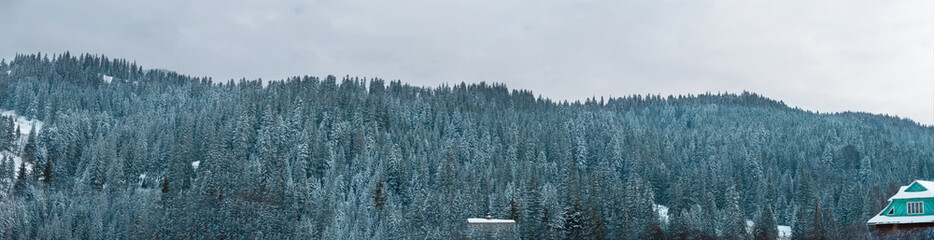 Panoramic view of the Carpathian Mountains in winter. Ukraine