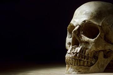 Human skull close up photo