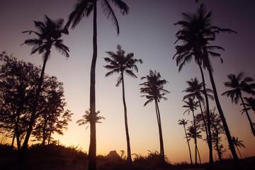 Palm trees on sunset beach in Goa, India