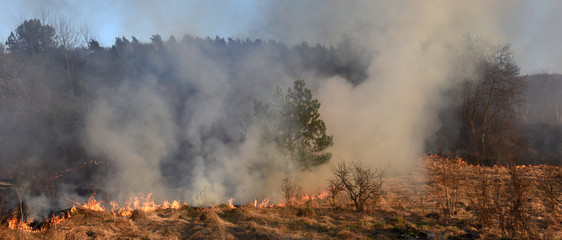 wildfire, forest fire, burning forest
