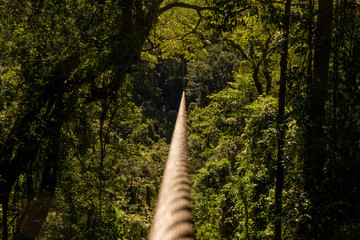 Zip line through the thick and green forest or jungle, with vanishing point on zipline