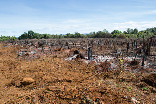 Slash and burn strategy of destroying jungle, contributing to deforestation, as seen as in the amazon in Brazil