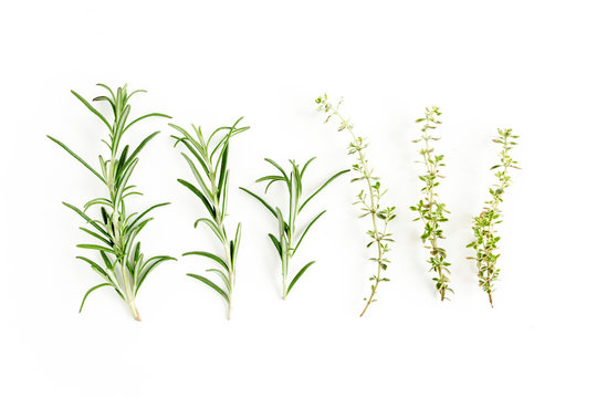 Green branchs of rosemary and thyme isolated on a white background. Flat lay. Top view