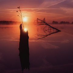 A sprout grows from an old stump. Foggy landscape of stump, and reflections at sunrise.