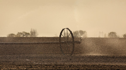 Cultivated field watering in early spring