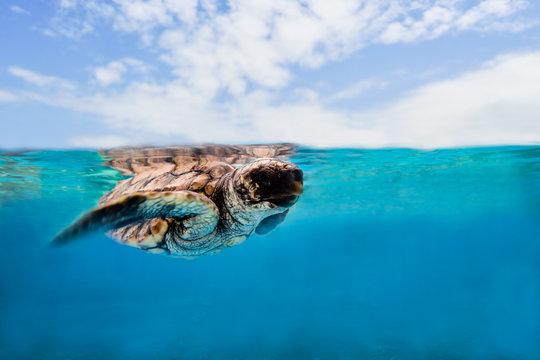 Turtle is swimming in ocean under blue sky