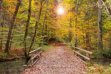 Wanderweg im Herbstwald