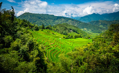 Photo sur Plexiglas Les champs de riz Landscape of Vietnam, terraced rice fields of Hoang Su Phi district, Ha Giang province. Spectacular rice fields.
