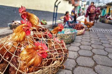 Chichicastenango, animal market, Guatemala