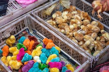 Chichicastenango, artificially colored chicks, animal market, Guatemala