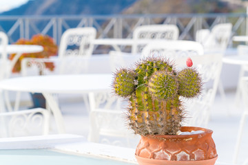 Potted plants in the village of Santorini Oia