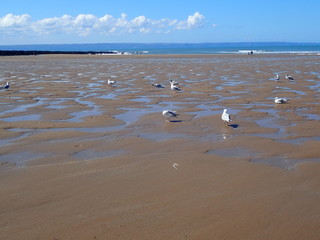 Seagulls and sandy summer in Devon