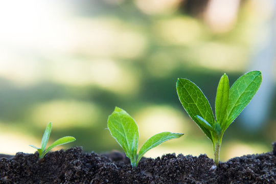 young plant growth, sustainable development