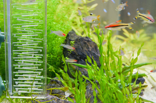 Aquarium with fish, stone, green plants and a device for supplying oxygen with air balls