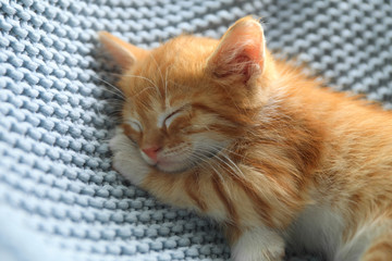 Sleeping cute little red kitten on light blue blanket, closeup view