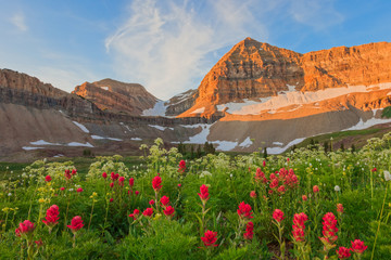 Red wildflowers on Mount Timpanogos, Utah, USA. Fototapete