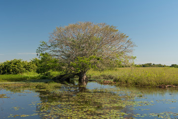 Wetland Tree and Water Vegetation in a Pond