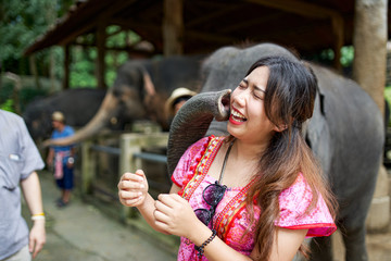 thai female tourist at elephant sanctuary getting face sucked by trunk making funny face
