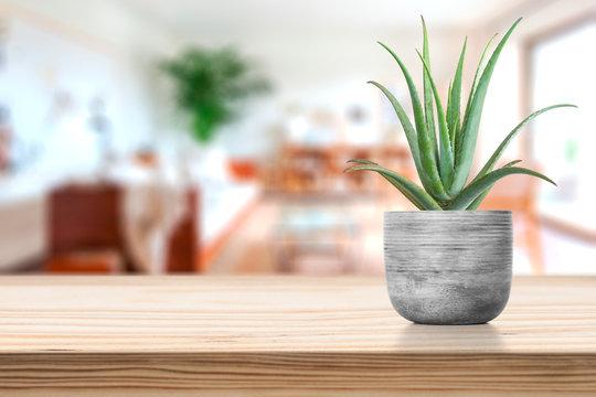 Cement Vase with aloe vera on vase pot on table