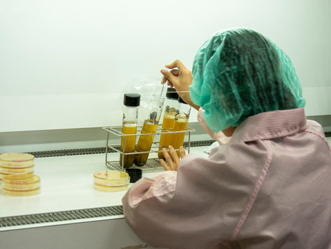 woman scientist worker working in safety cabinet fume hood for microbiological testing