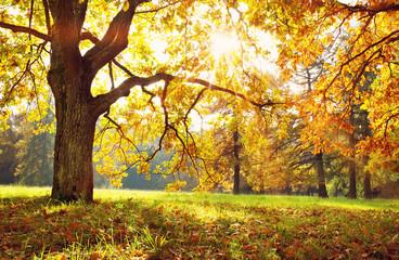 Aluminium Prints Autumn trees in the park in autumn on sunny day