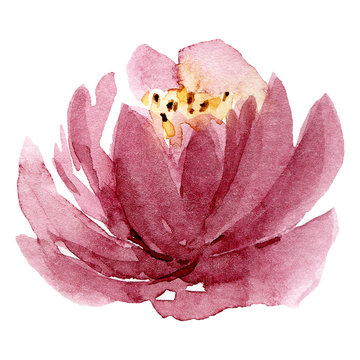 Pink single flower, watercolor floral illustration, decoration for poster, greeting card, birthday, wedding design. Isolated on white background. Hand painting.