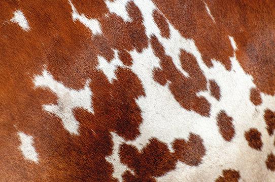 Animal hair skin  skin texture
