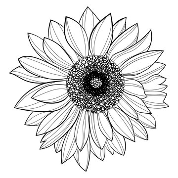 Sunflower flower. Black and white illustration of a sunflower. Linear art. Tattoo blooming sunflower.