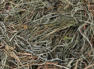 Hay, straw, thatch pile background and texture