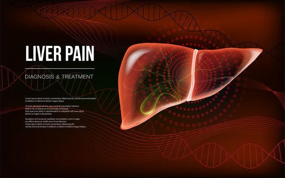 Dark red realistic liver and gallbladder banner concept