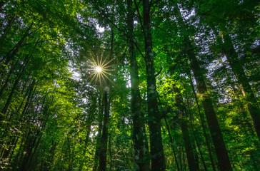 Waldwandern Eibenholz Stamm Sonnenuntergang Stern