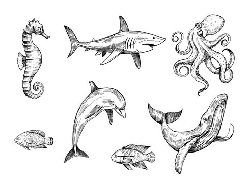 Sketch of sea creatures. Hand drawn illustration converted to vector