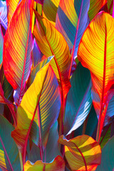 Wall Mural - background, colorful, leaves, illuminated, by, sun, large shot