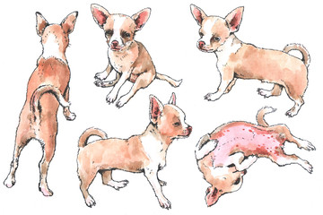 Hand drawn watercolor and ink Toy Terrier sketch