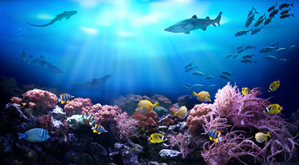 Wall Murals Coral reefs Underwater view of the coral reef. Life in tropical waters.