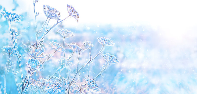 beautiful winter landscape. frozen grass in frost day. clear frosty weather of winter. winter season background. copy space. soft selective focus