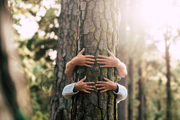 Environment people save the planet and stop deforestation concept with hidden couple of senior hugging with love an old big tree pine in  the forest -defocused wood in backgorund