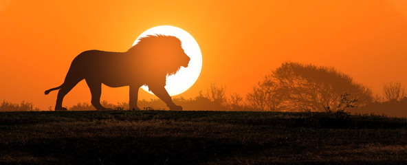 Spoed Fotobehang Oranje eclat African landscape at sunset with silhouette of a big adult lion