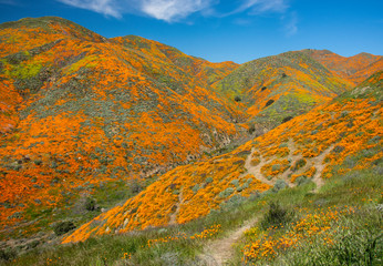 Super Bloom Mountain