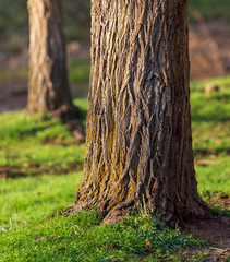 Tree trunk on spring nature