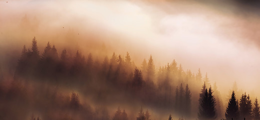 Incredibly beautiful sunrise in the mountains. Coniferous trees in the fog and the rays of the sun...